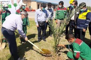 مراسم کاشت درخت در محوطه پتروشیمی کارون برگزار شد