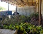 اهدای بیش از ۳ هزار نهال مثمر از سوی پتروشیمی بوعلی سینا به منابع طبیعی بندر ماهشهر