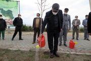 غرض شدن تعدادی نهال  در هفته منابع طبیعی و درخت کاری و با حضور سرپرست سازمان منطقه آزاد انزلی