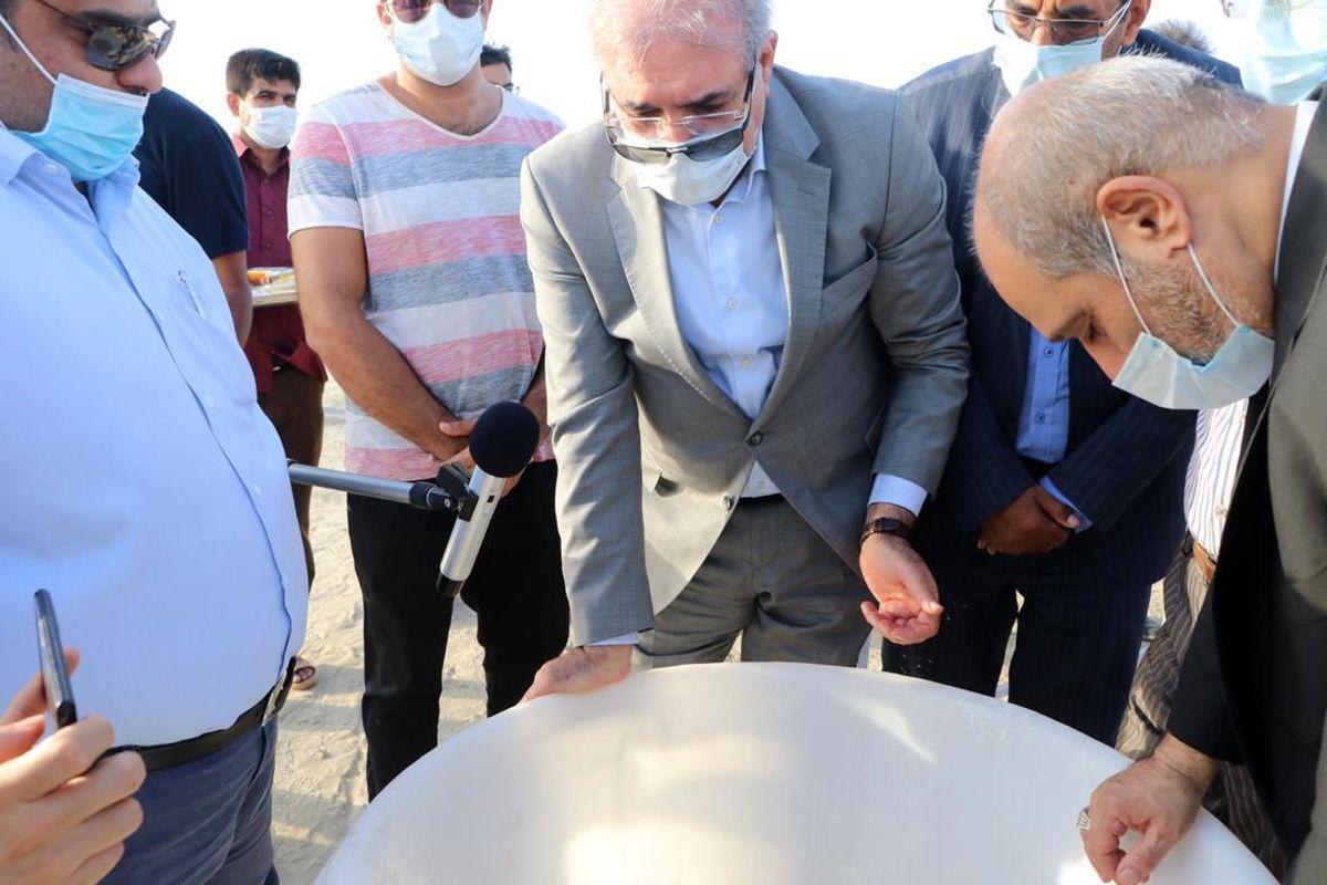 بازدید دبیر شورای عالی مناطق آزاد قشم از مزرعه ۲۰۰ هکتاری پرورش میگو در نقاشه