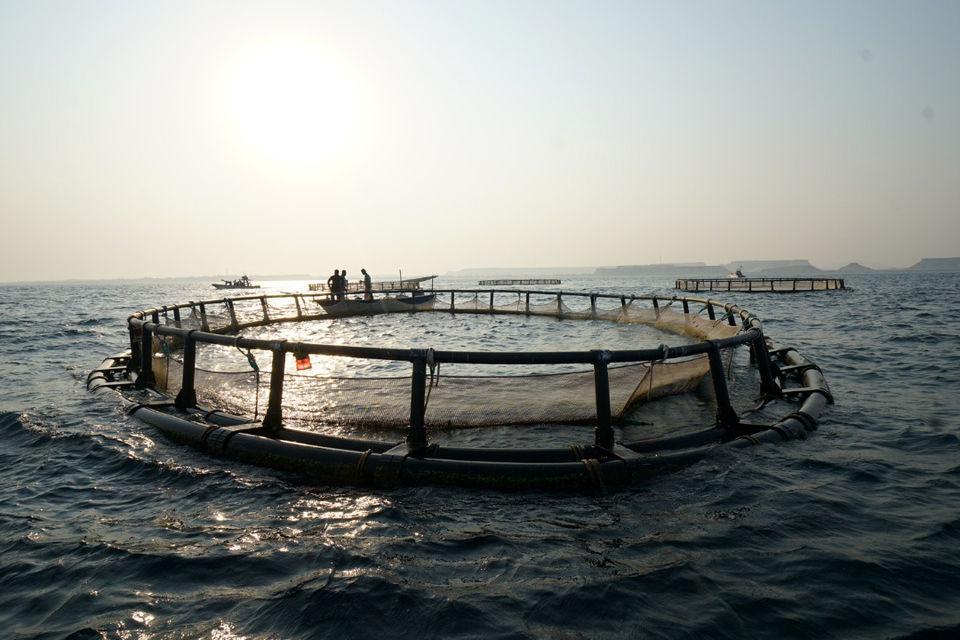 بهره برداری از 3 پروژه پرورش ماهی در دریا با هدف افزایش محصولات صادرات محور